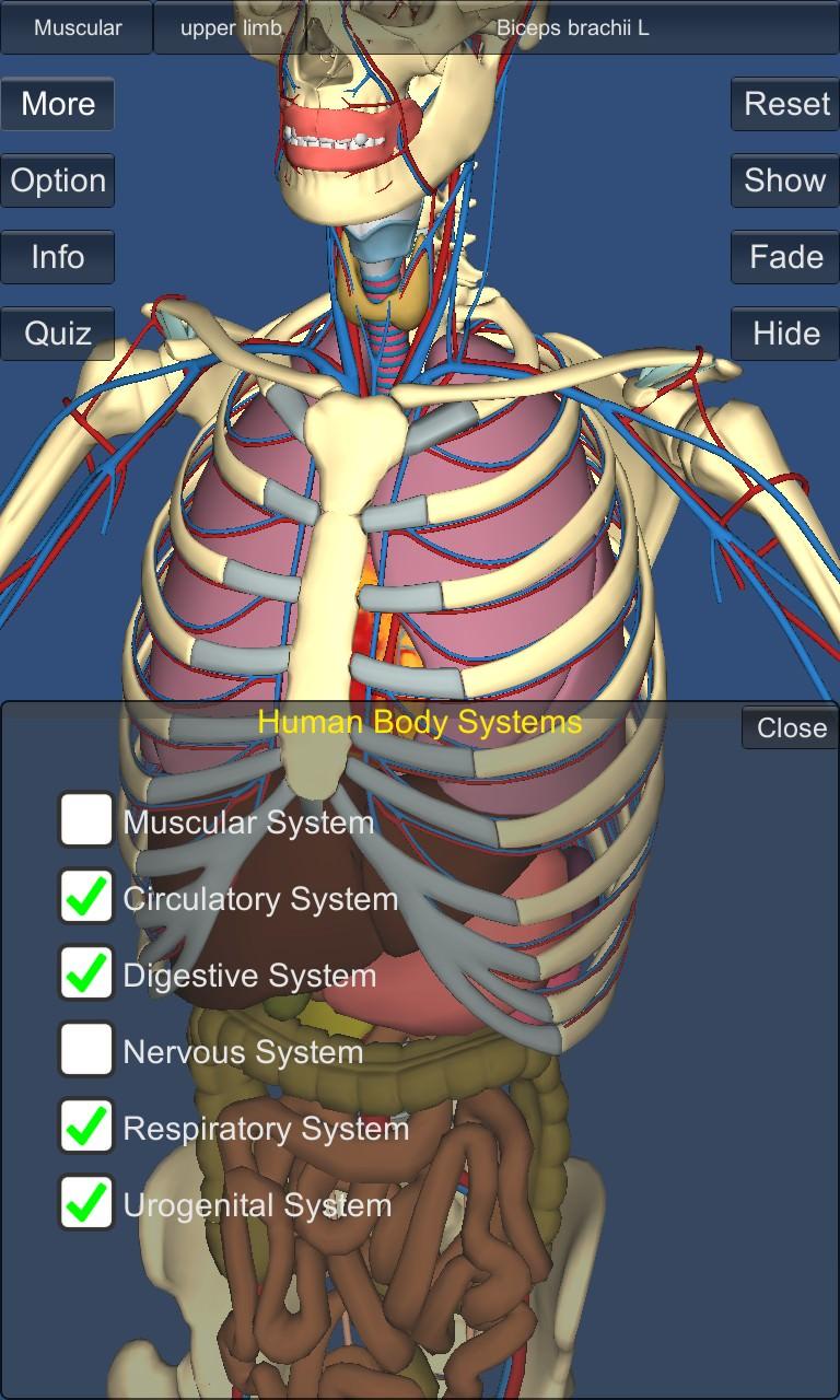Screenshot, 3D Anatomy